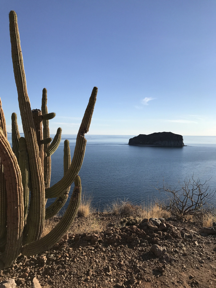 Baja Sur: Where the Oceans Meet the Sky and the Desert Enchants