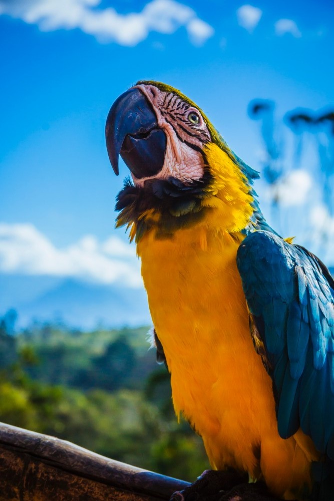 colombia travel, macaw