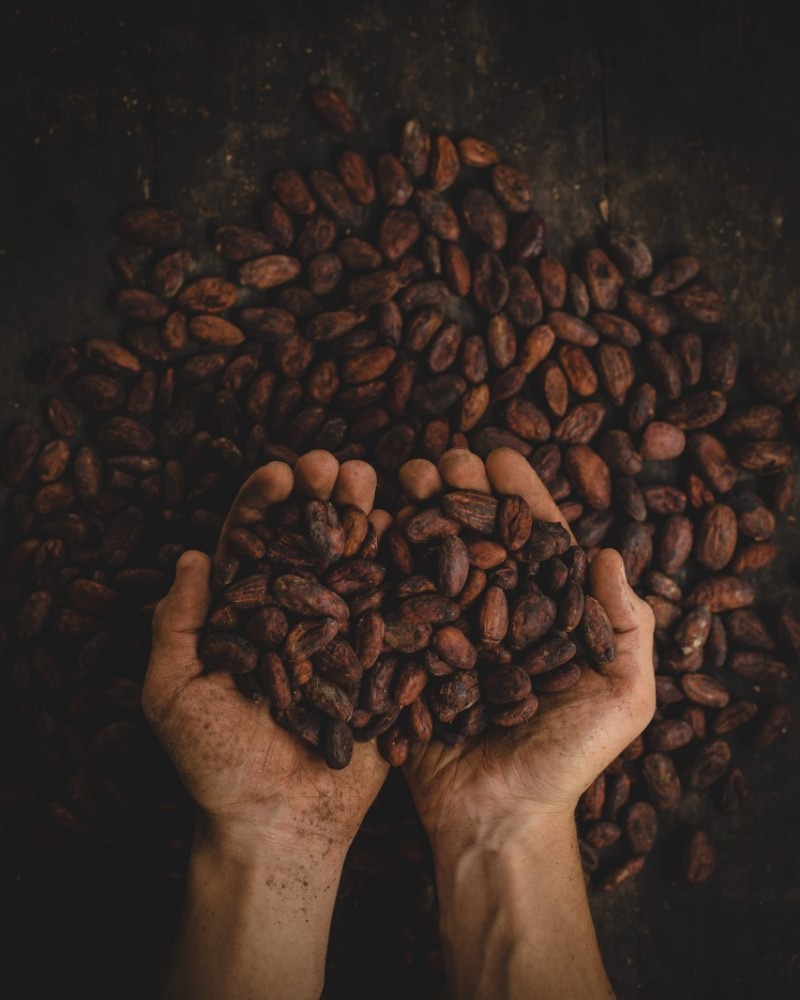colombia travel, cacao