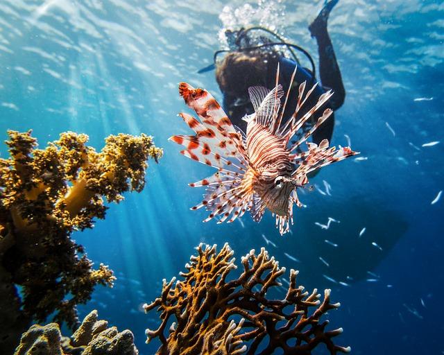colombia travel, scuba, lion fish, cartagena