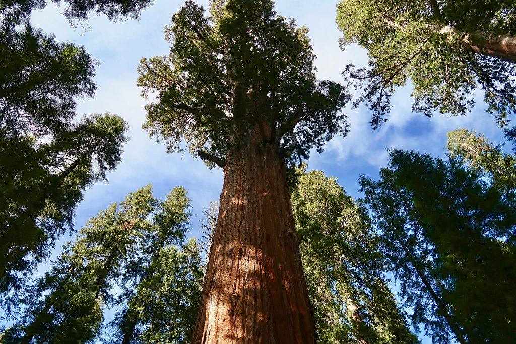 national park, national park service, national parks to visit, redwoods, california