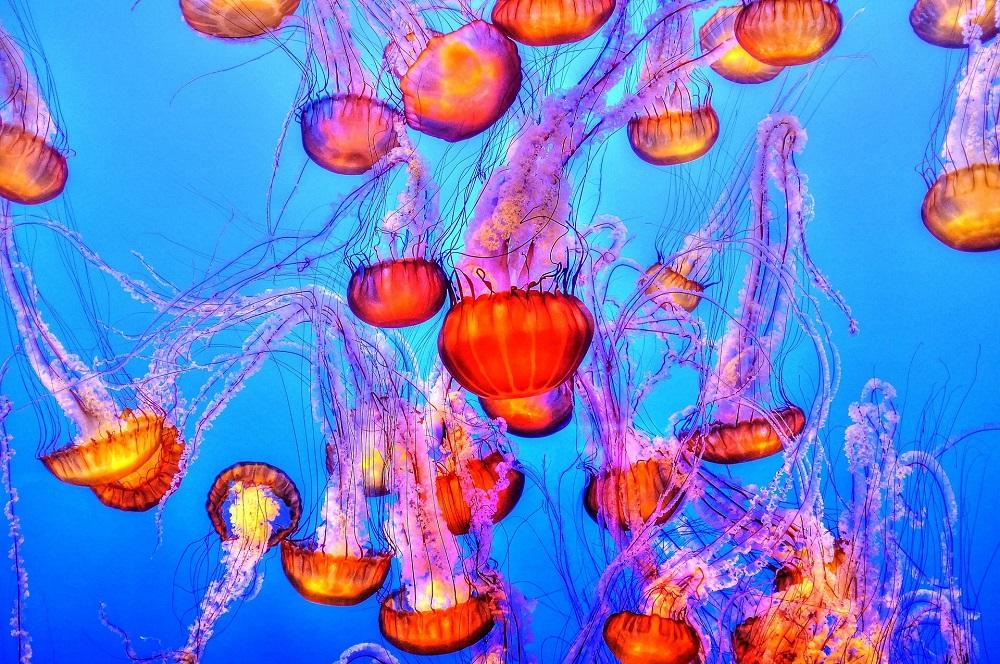 jellyfish, Things To Do in Gatlinburg, ripleys aquarium