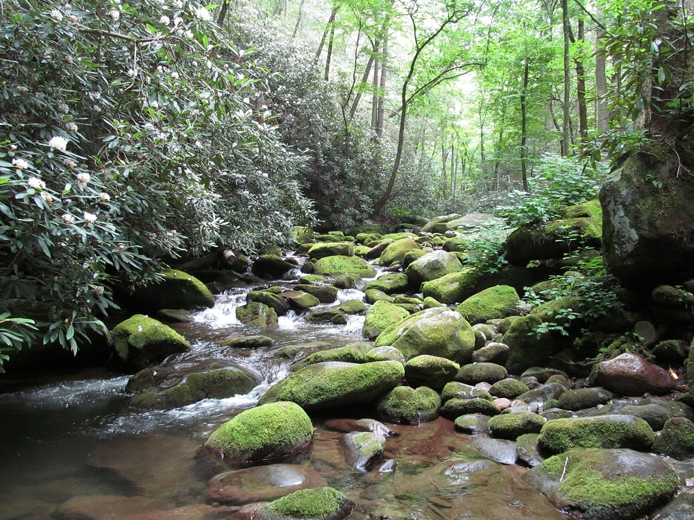 Things To Do in Gatlinburg, river, creek, trail