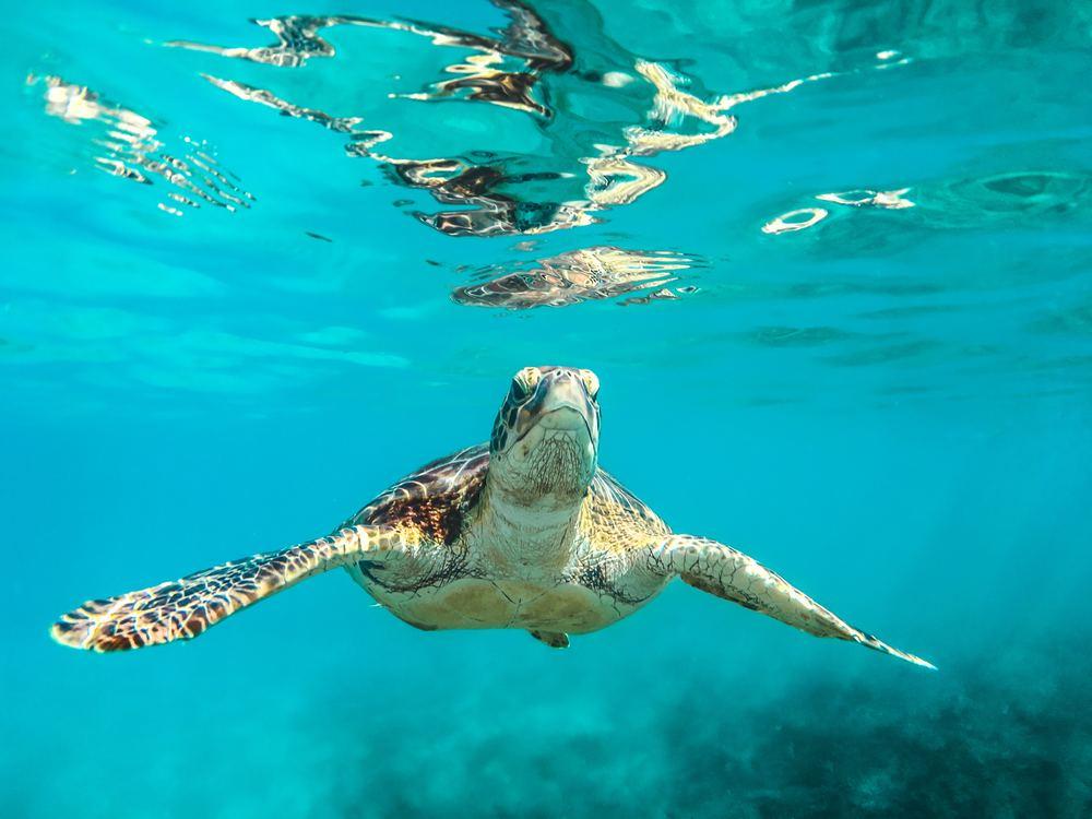 los cabos, Snorkeling Spots in Los Cabos, sea turtle, Sian Ka'an Biosphere Reserve