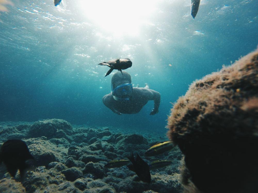 Snorkeling Spots in Los Cabos