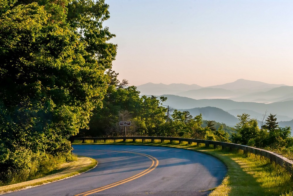 A Quick Guide to the Beautiful Flowers of the Blue Ridge Parkway