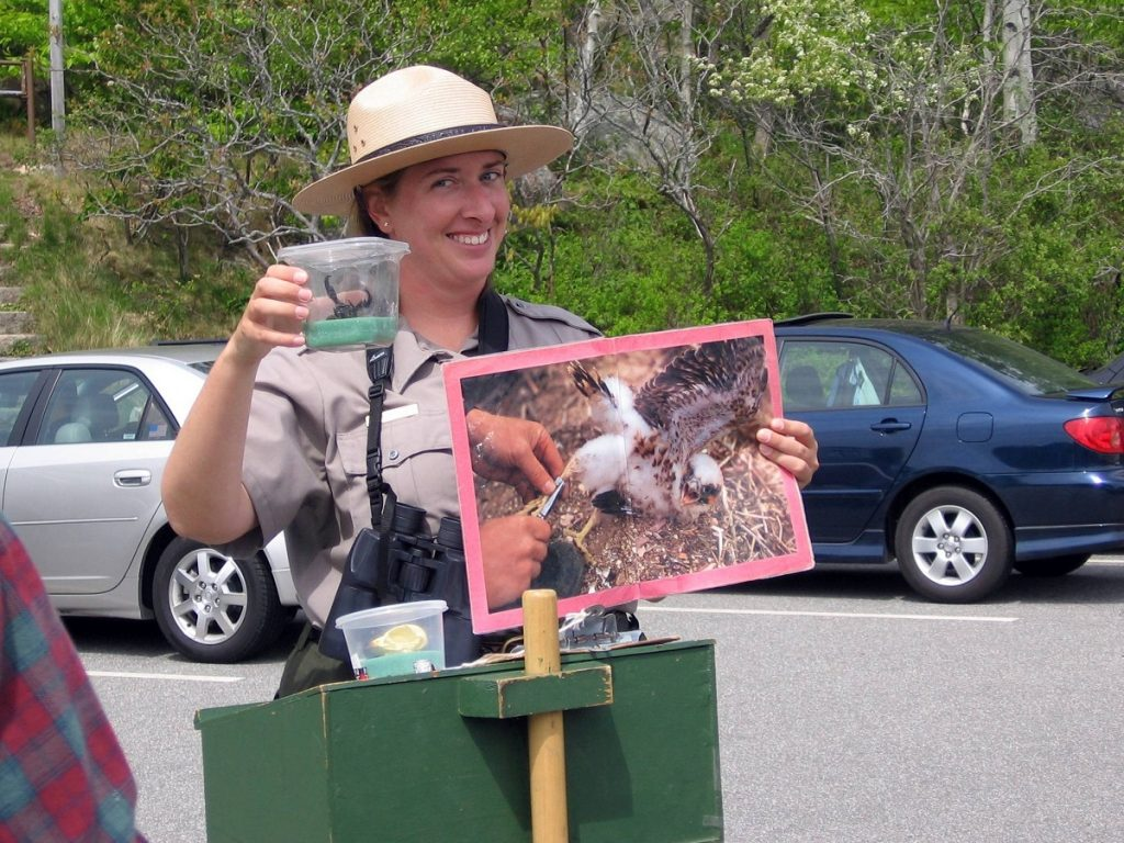 park ranger, acadia national park