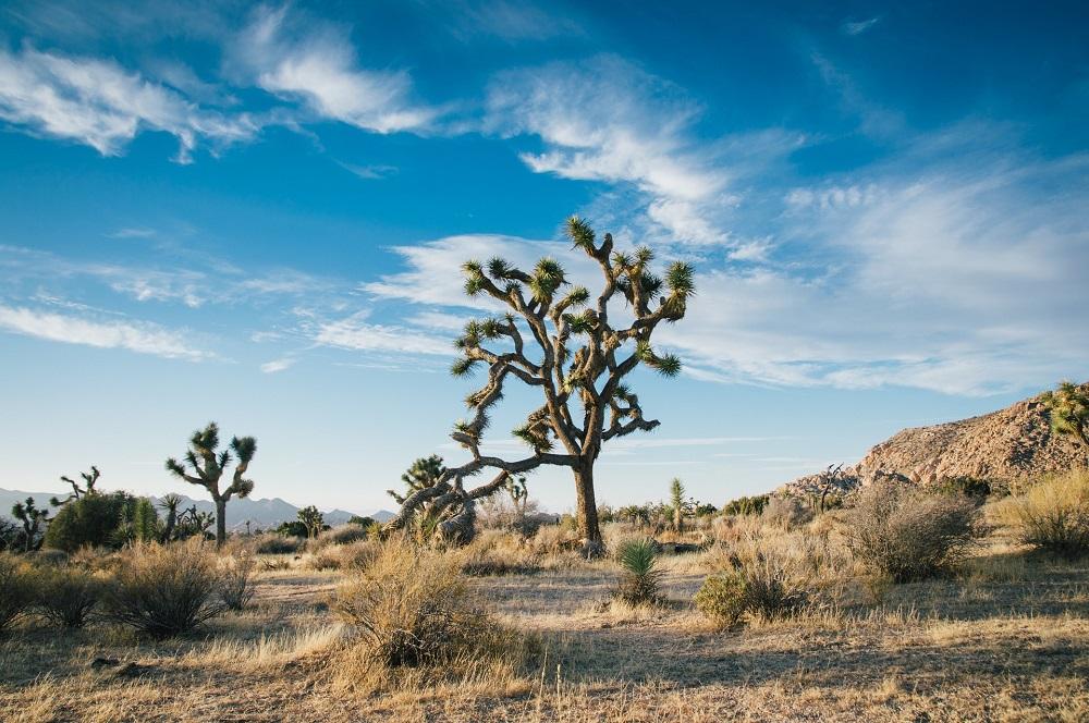 desert landscape, arid landscape