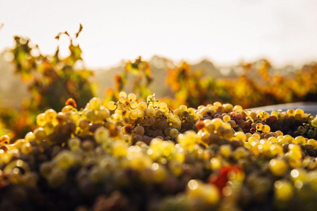 vineyard, wine regions