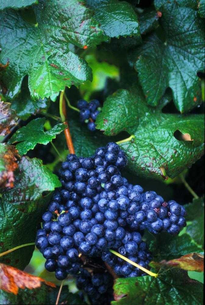Yadkin Valley, North Carolina Wines,