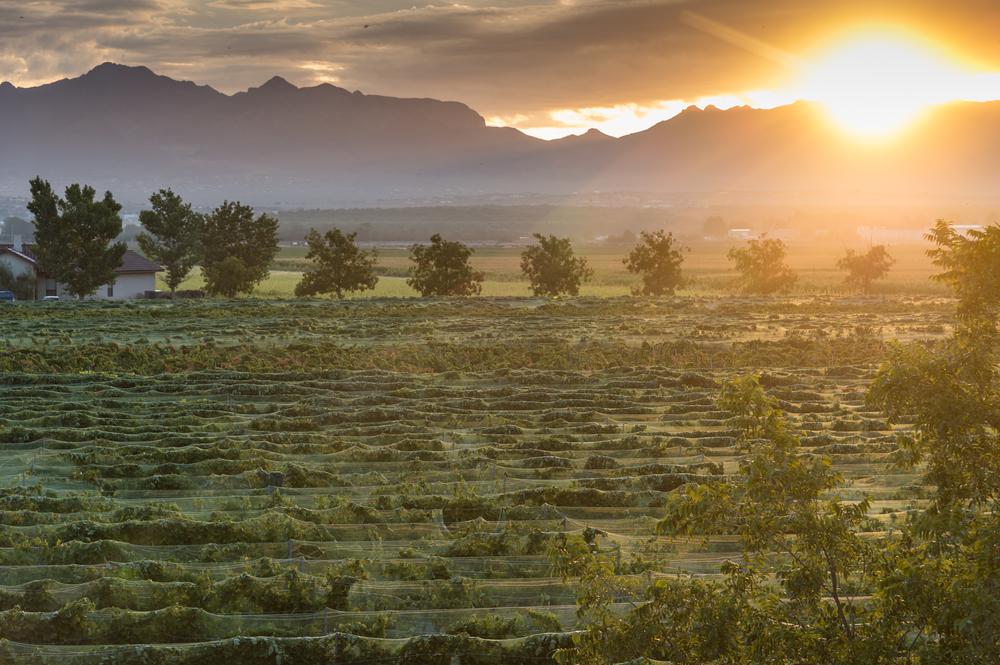 New Mexico, Unique Wine Regions,