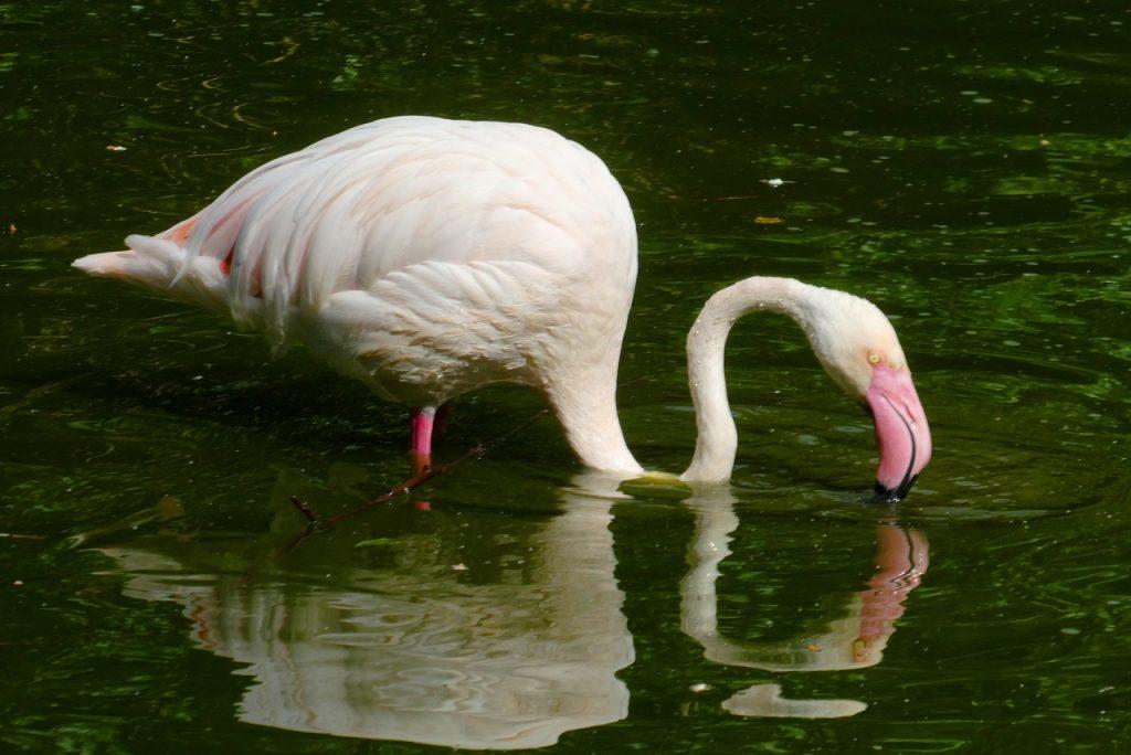 Sian Ka'an Biosphere Reserve birds