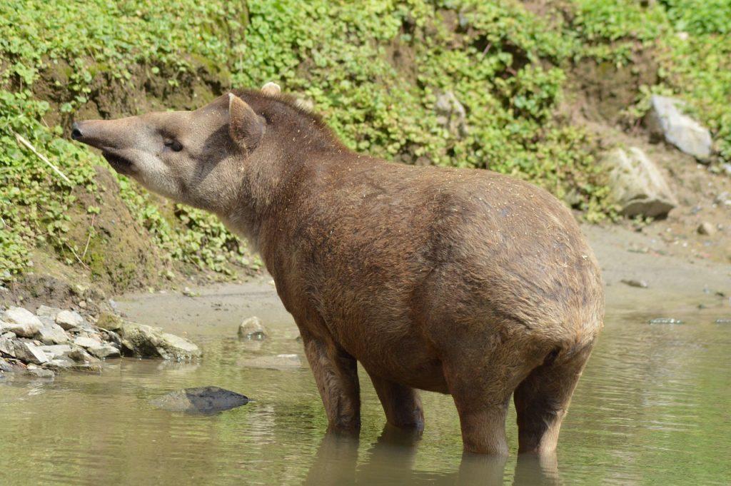 Sian Ka'an Biosphere Reserve wildlife